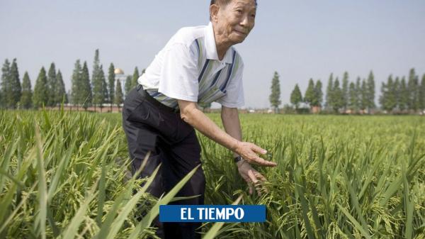 """چین با افتخار یوان لانگ پینگ ، """"پدر برنج ترکیبی"""" – آسیا – بین المللی را اخراج کرد"""