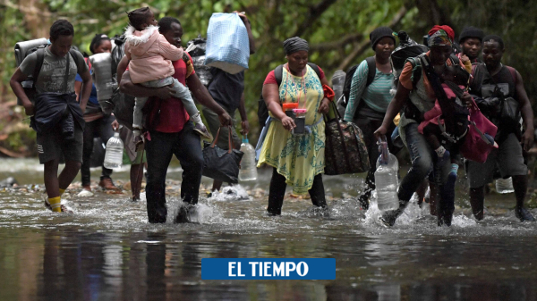 Read more about the article شرپاهای جنگل – آمریکای لاتین – بین المللی